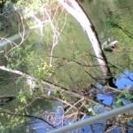 Reuvens Pictures April 2010 004