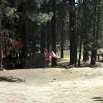 Whitsett-2011-campsite