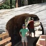 Sequoia 04