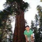 Sequoia 10